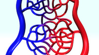 3d model arterys veins