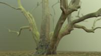 scanned tree photorealistic 3d obj