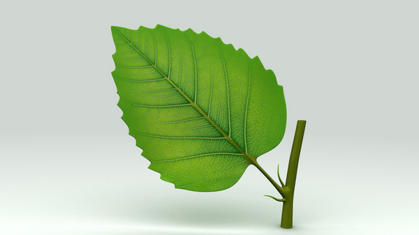 plant leaf 3d model