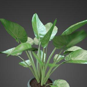 plant home zantedes 3d fbx