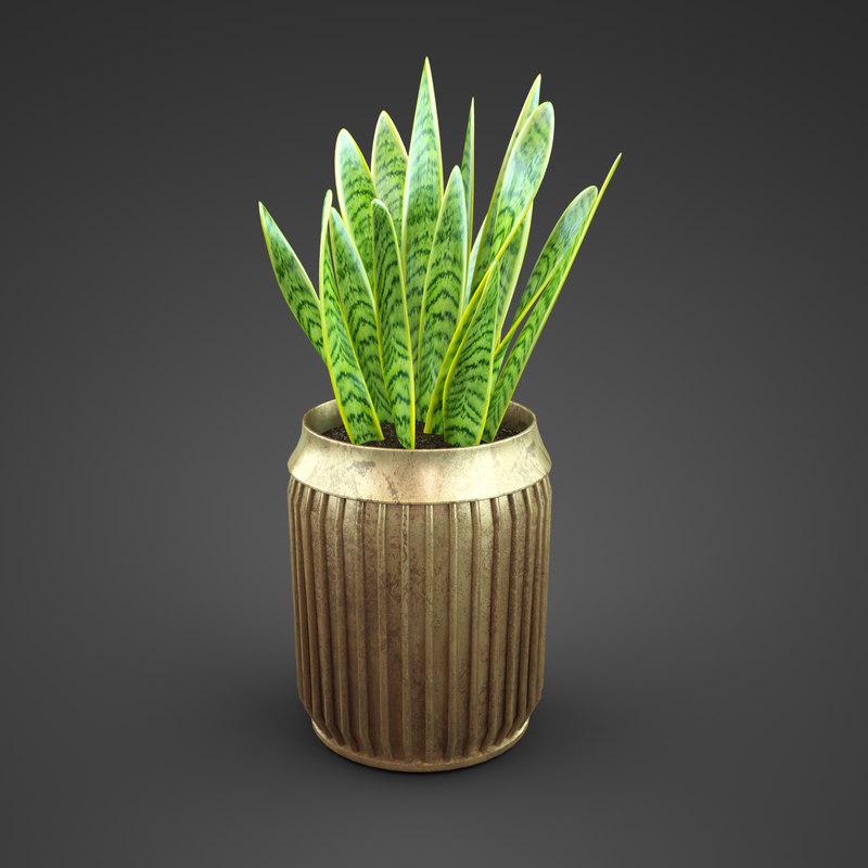 sansevieriya plant home 3d model