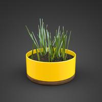 grass plant ma