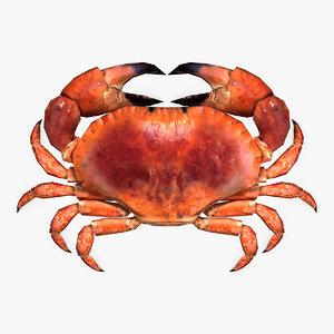 crab rig max