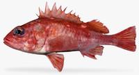 3d model pinkrose rockfish