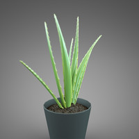 3d plant home aloe model