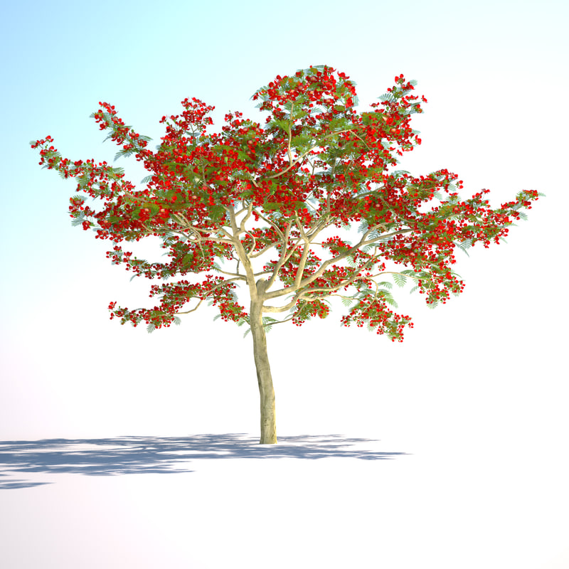 3d flamboyant tree royal