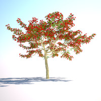 3d flamboyant tree royal