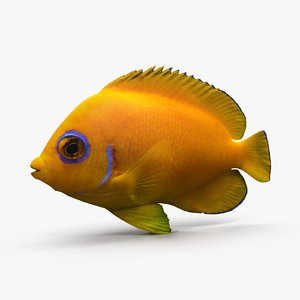 lemonpeel angelfish 3d dxf