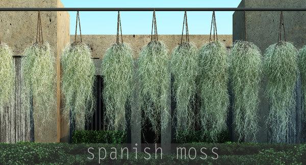 spanish moss max