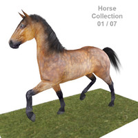 Realistic Horse 01