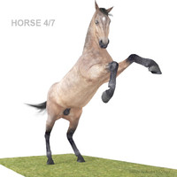 Realistic Horse 04