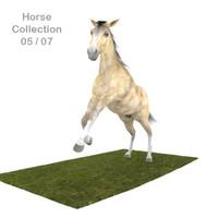 3d model realistic horse 05