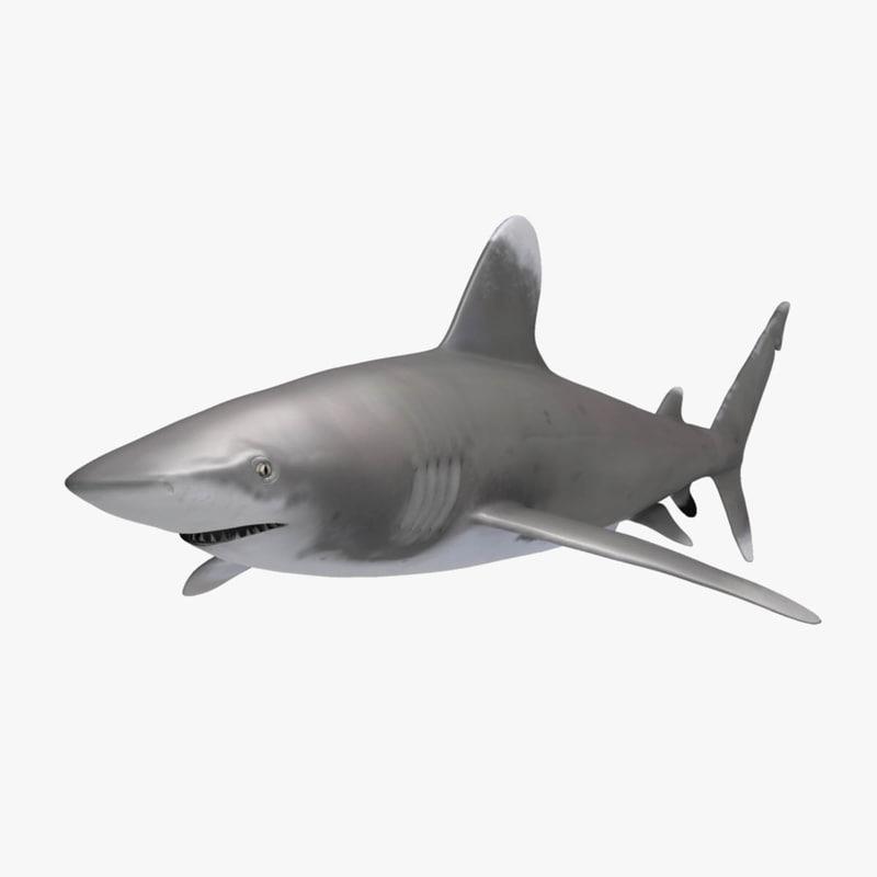 oceanic whitetip shark obj