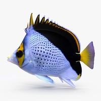 3ds butterflyfish tinkeri