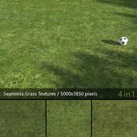 Lawn Grass Texture