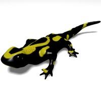 3d model of salamander