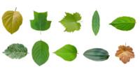 leaf texture 10 pack