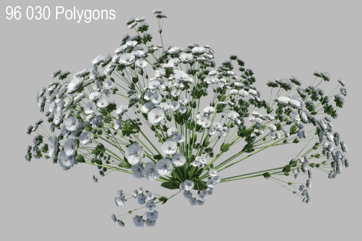 gypsophila baby s flowering 3d model