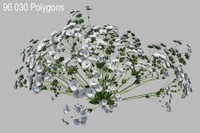 3d model gypsophila baby s flowering