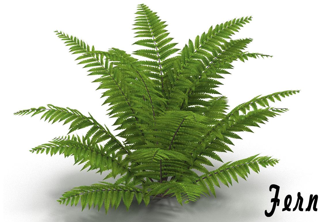 3d model fern bush