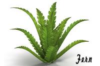 3d fern bush