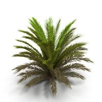 3d fern bush model