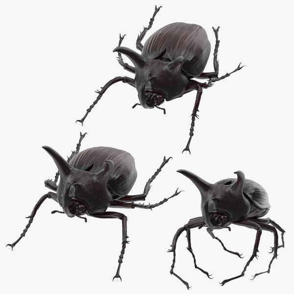 3d rhinoceros beetle poses model