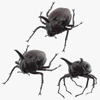 3d rhinoceros beetle poses model