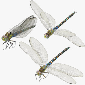 3d dragonfly 3 poses model