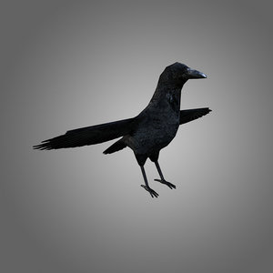 crow low-poly 3d 3ds