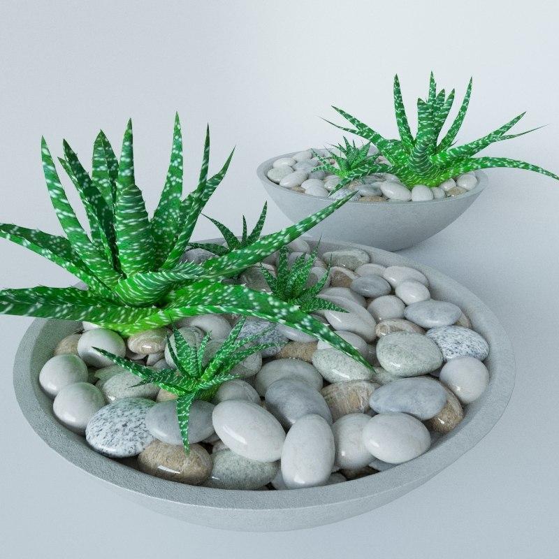 3d max succulent bowl