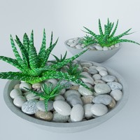 Succulents in bowl with stones