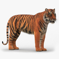 3d model tiger rigged
