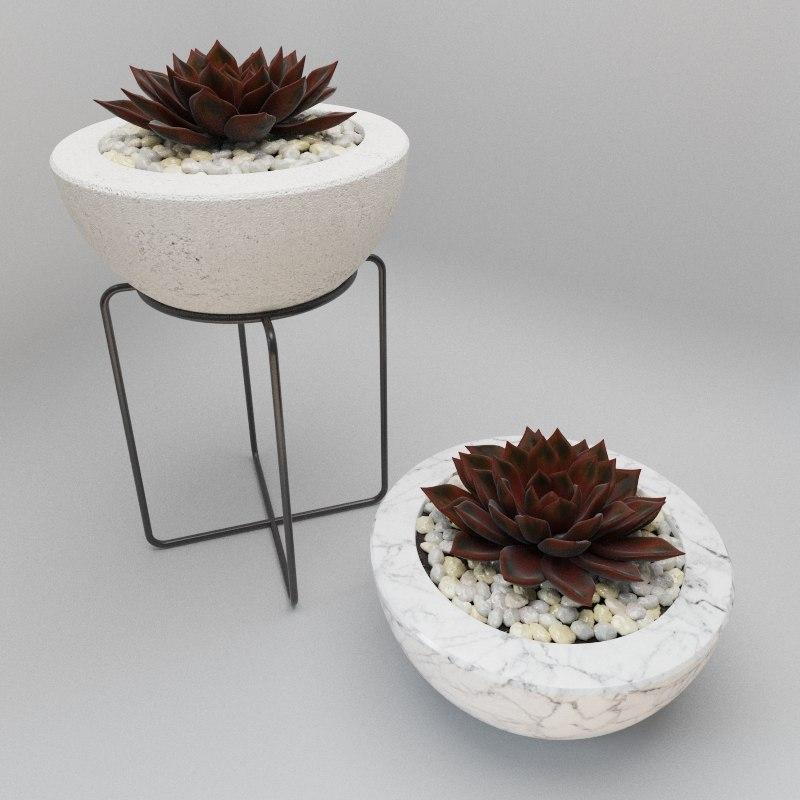 succulent bowl 3d max