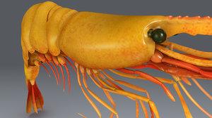 3d model prawn shrimp