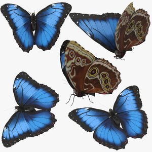 3d blue morpho butterfly 5 model