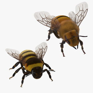 bee bumblebee 3d model