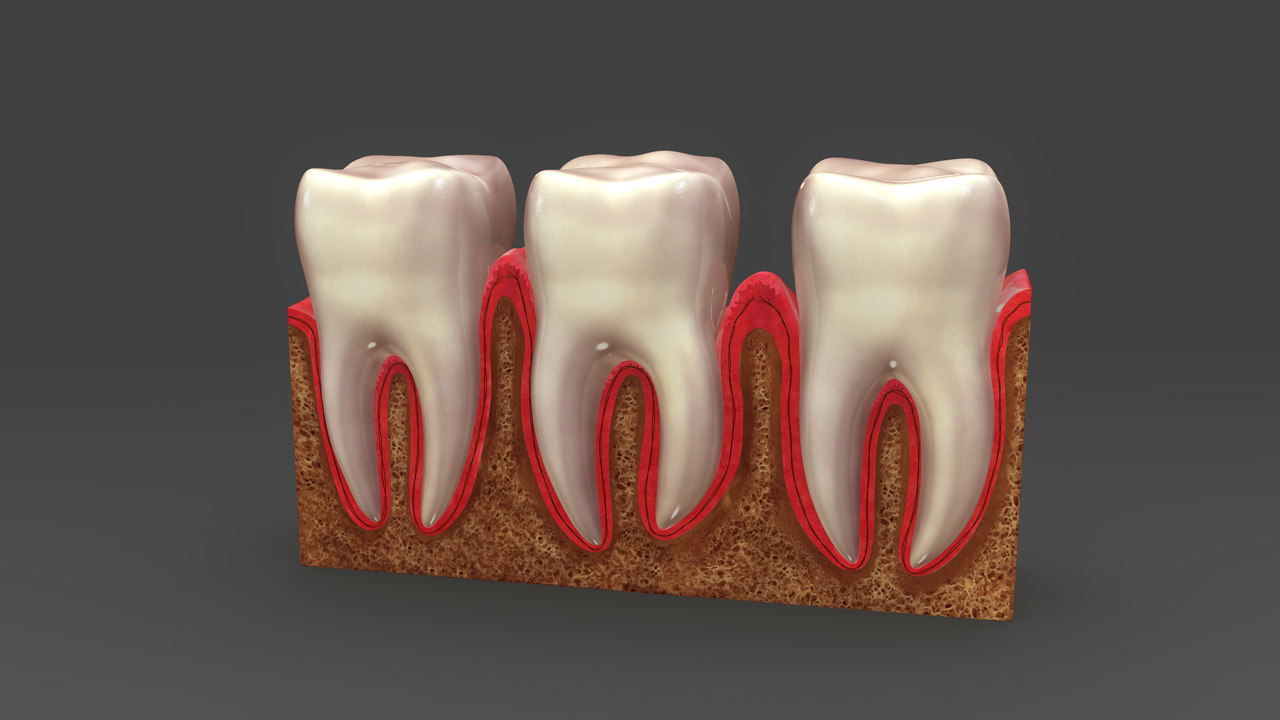 obj teeth anatomy