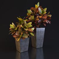 3d model croton plant