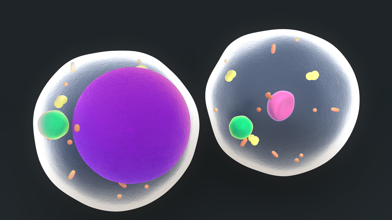 fat cells 3d model