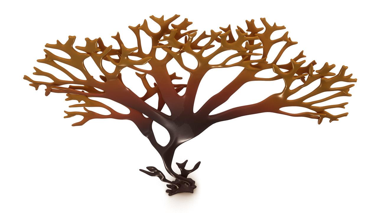 3d chondrus crispus model