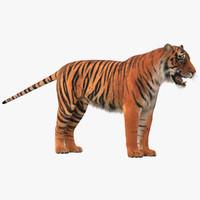 tiger ma
