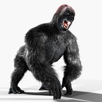 3d model gorilla animation