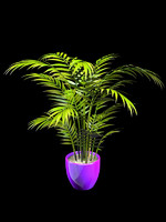 3d model palm interior design