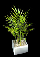 3d palm 90 model