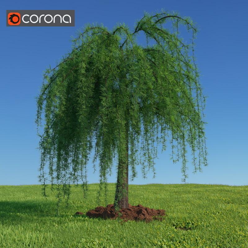 3d larix european larch tree