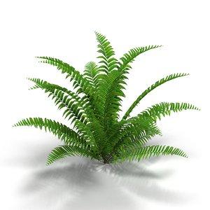 fern bush 3d model