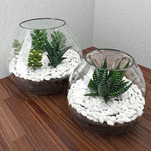 max succulent glass bowl
