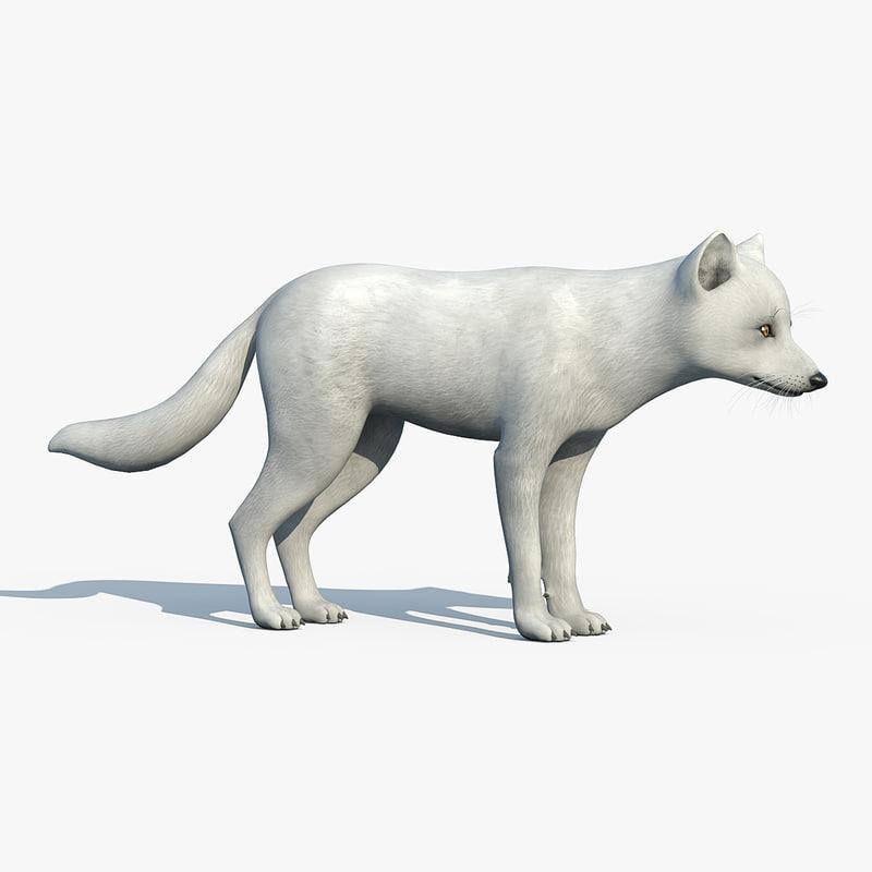 arctic fox 3d max