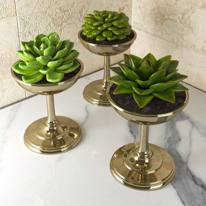 3d succulent